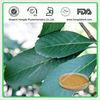 100%Natural Loquat Leaf Extract Powder Ursolic Acid 25%