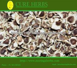 Elite and premium moringa seeds