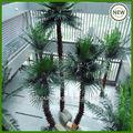 Palmeira nomes/palmeiras artificiais