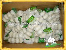 Garlic China/Ajo BROTHER KINGDOM/Pure white garlic from origin
