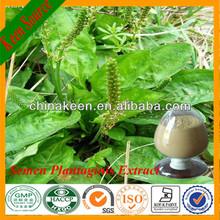 Organic Pharmaceutical Use Plantago Extract/Plantain Extract Powder
