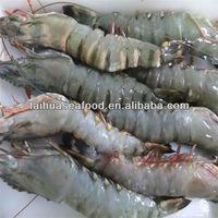 frozen wholesale gulf shrimp