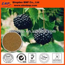 Buy GMP/Kosher Eleutheroside Siberian Ginseng Extract