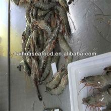 best frozen fresh tiger prawns for sale