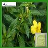 Damiana Extract Powder