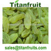 2013 new crop turpan green raisins with good quality and low price