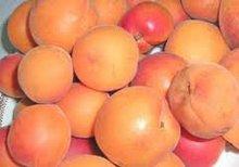 Organic apricot puree