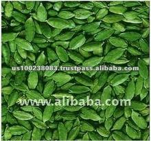 United States High Quality Fresh Green Cardamom