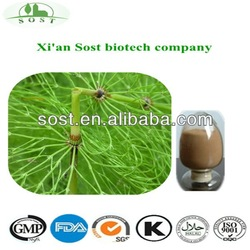 horsetail powdered extract Silica acid