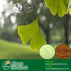 Ginkgo Biloba extract 24%Flavones 6% lactones HPLC