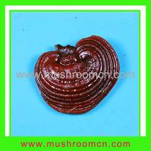 Best slice and whole part Dried Ganoderma Lucidum Mushroom