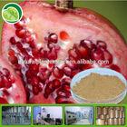 punicalaginor pomegranate peel extract powder