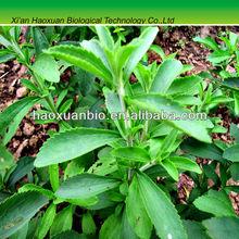 green sugar stevia