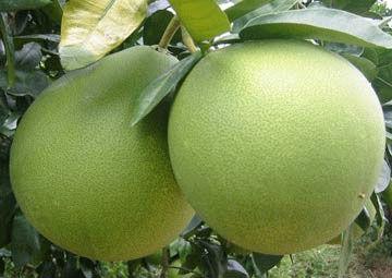 Fresh Pomelo Fresh Fruit