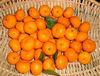 New cropped Fresh Oranges Citrus Fruit