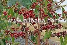Coffee Beans, Cashew Nuts, Wheat, Macadamia andDal