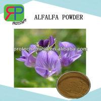 Pure Plant Extract Powder Bulk Alfalfa