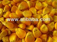Yellow Corn / Maize