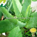 100:1 Aloe Vera Whole Leaf Freeze Dried Powder