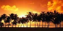 Orange Sunset Palm Tree Beach Scene Photo License Plate