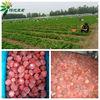 15-25cm frozen strawberry