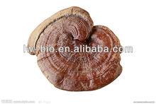 lingzhi extract 30% polysaccharides 4% Triterpenoids