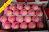 Exported to Middle East China Shandong Fresh Fuji Apple