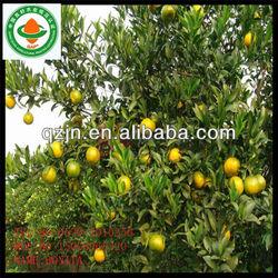 orange fresh fruit