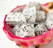 Organic Heirloom Dragon Fruit Tree Seeds Cactus Pitaya Pitahaya Seeds White Red Hylocereus Undatus F12