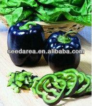 Organic Heirloom RARE Black Deep Purple Pepper Seeds Bell Sweet Pepper F1 Vegetable Seeds Garden Seeds