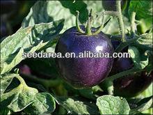 Organic Heirloom Seeds Cherry Purple Tomato Seeds Blue Fruit Indigo Rose Garden Freshly Harvested Vegetable
