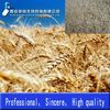 /product-gs/100-natural-instant-wheat-germ-powder-with-top-quality-1398724334.html