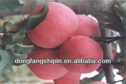 yantai fresh fuji apple 18kg and 20kg with low price and high quality