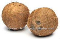 High Quality Whole Coconut