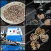 Thoyu Brand walnut shelling machine/walnut sheller/walnut huller