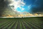 Agricultural Land For Sale.