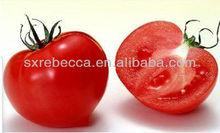 Pure natural tomato extract,tomato extract lycopene,natural lycopene powder