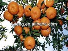 orange 2013 fresh
