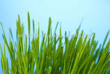 bebida a base de hierbas con la prueba