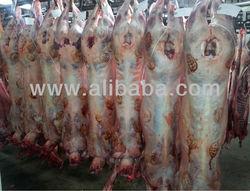 Premium Quality Non-Stun Halal British Lamb, Sheep & Beef