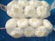 new crop fresh garlic 4.5-6.0cm