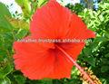sal de legumes com coral e flor de hibisco