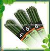(PE+ steel) stick shaped green garden decoration