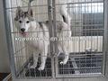 Xq jaula de perro grande/soldada de malla de pet jaula del perro