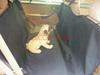2014 New Design Pet Dog Products 140cm*145cm Waterproof Pet Car Seat For Sale