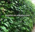 verde plantasdefolhagem