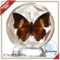fousen secos y real de la mariposa de resina de la escultura