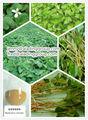 Heartleaf houttuynia extrato da erva para aliviar a inflamação, desintoxicar, distância carbúnculo, eliminar fester, diurese