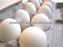 huevo fresco de la india
