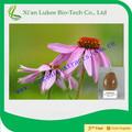 echinacea purpurea polifenóis cichoric ácido extrato de echinacea